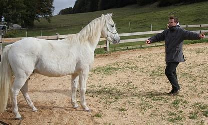 Développement personnel facilité par le cheval > Bibliographie