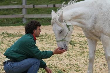 l'intelligence émotionnelle facilitée par la relation individu/cheval � formation pour vous � collaborateur, cadre ou cadre dirigeant