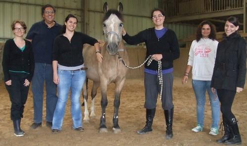 Formation à la communication non verbale facilitée par le cheval : ma prochaine démo