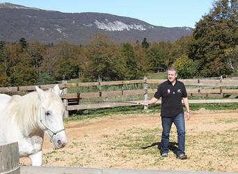 Développement personnel facilité par le cheval > mes questions